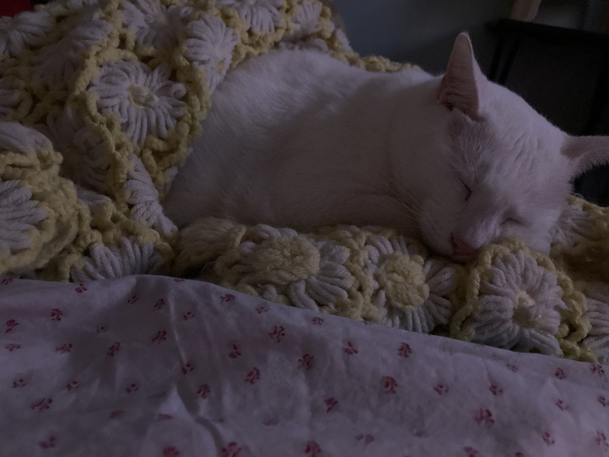 #Caturday is always nap day
