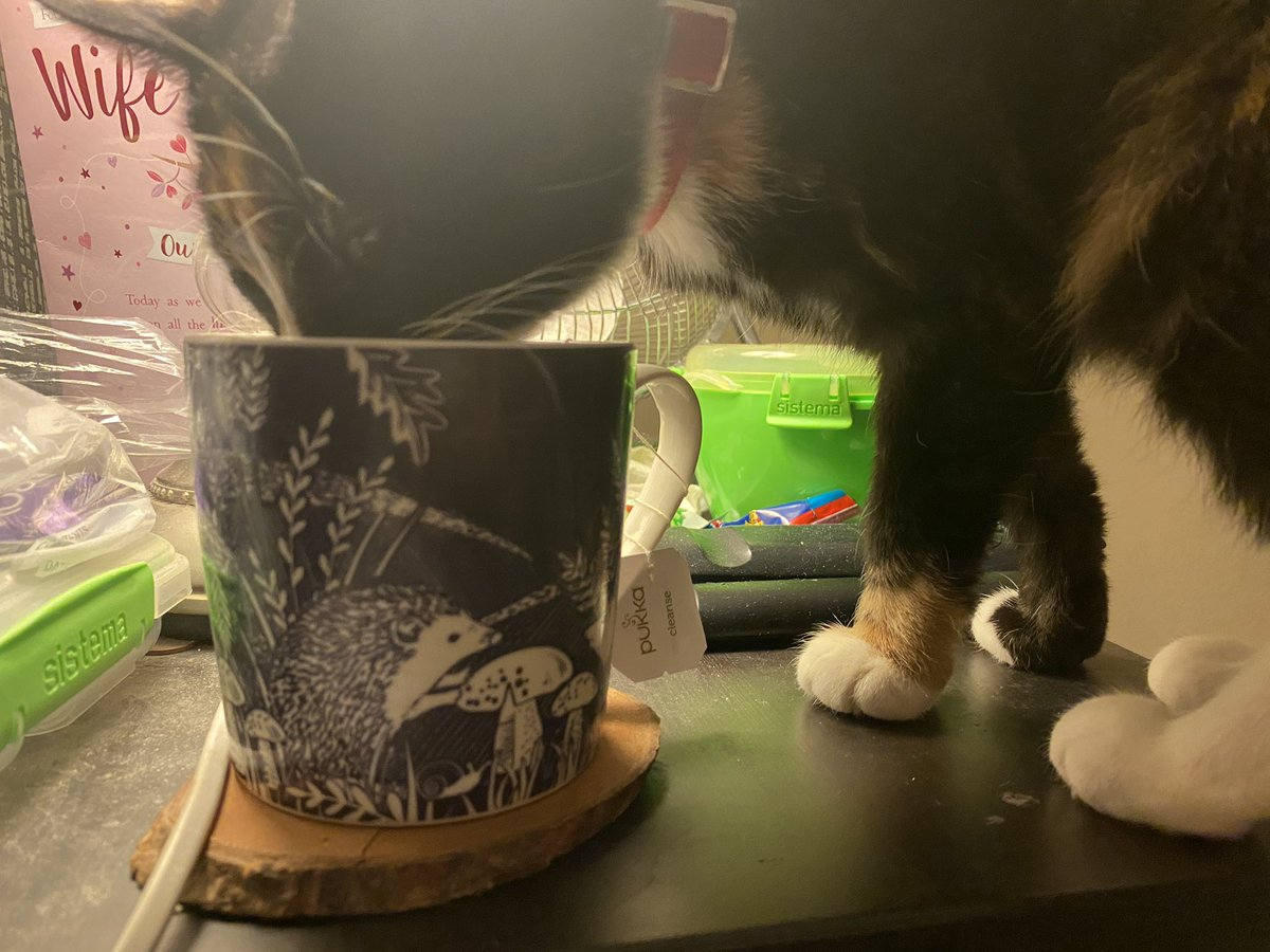 Wish servant 1 would finish her tea, then I can practice my amazing teabag tackling! #cats #CatsOfTwitter #Caturday #pukka