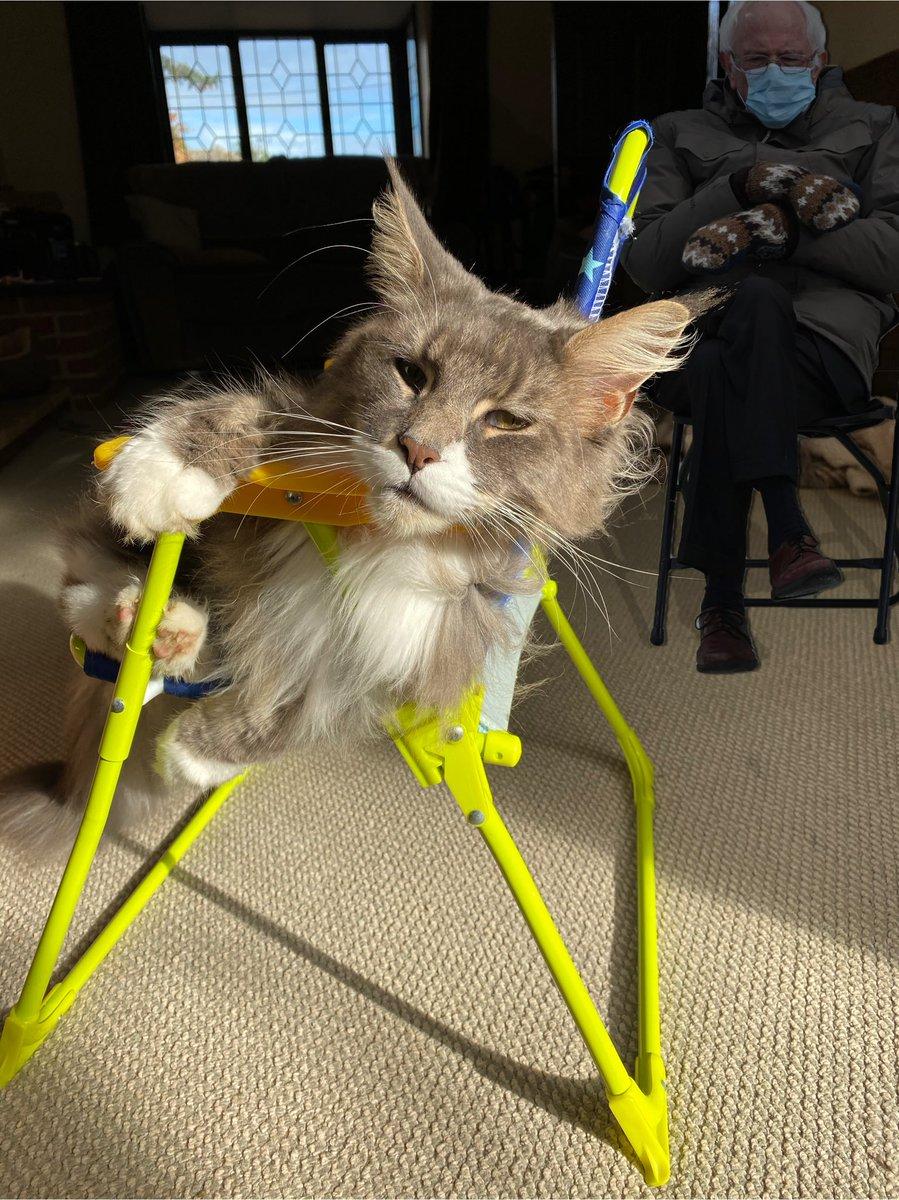 Happy #caturday   #Berniememes