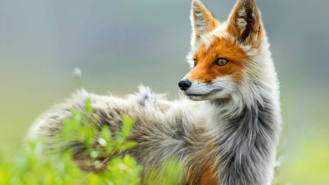 Replying to @IngridNewkirk: Victory! L'Oreal has agreed to stop using real fur of any kind for brushes.