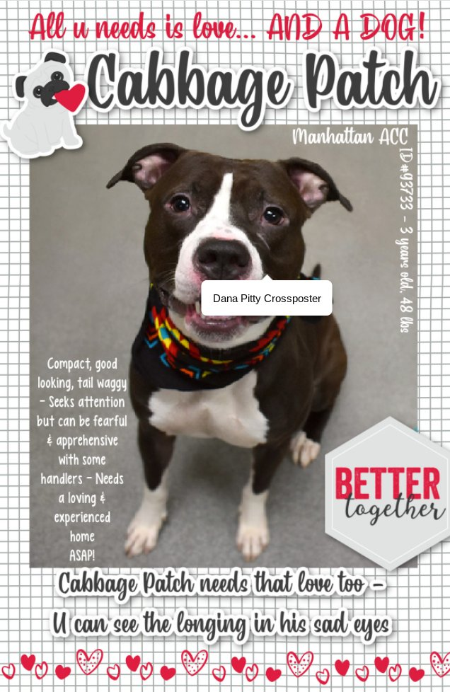 DIES NOON TOMORROW w/out our help!😭This pup just needs love/patience/experience so he can relax & get the positive attention he needs/deserves.Instead, they want to kill him!🤬PLS. pledge/share to save him! #PLEDGE #RESCUE #FOSTER #ADOPT New Hope Partners