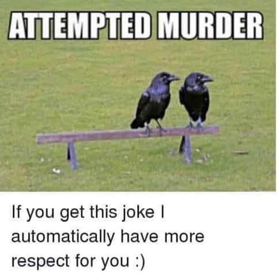 #Crow #Murder #ShutUp it`s #hilarious #jokeoftheday #Jokes #LOL #Funny #FunniestTweets #Adult #Humor #Humournoir #Canada #Quebec #Ontario