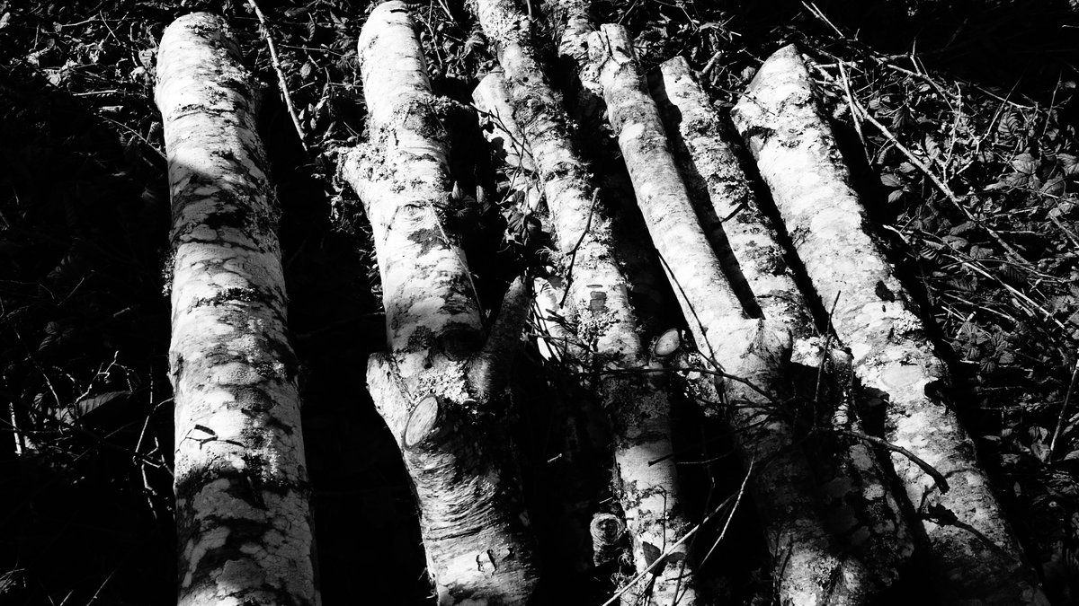 Today, Point Reyes, CA   #blackandwhite #blackandwhitephoto #BayArea #blackandwhitephotography #california #naturephotography  #artwork #monochrome #monochromephotography #nature #PointReyes