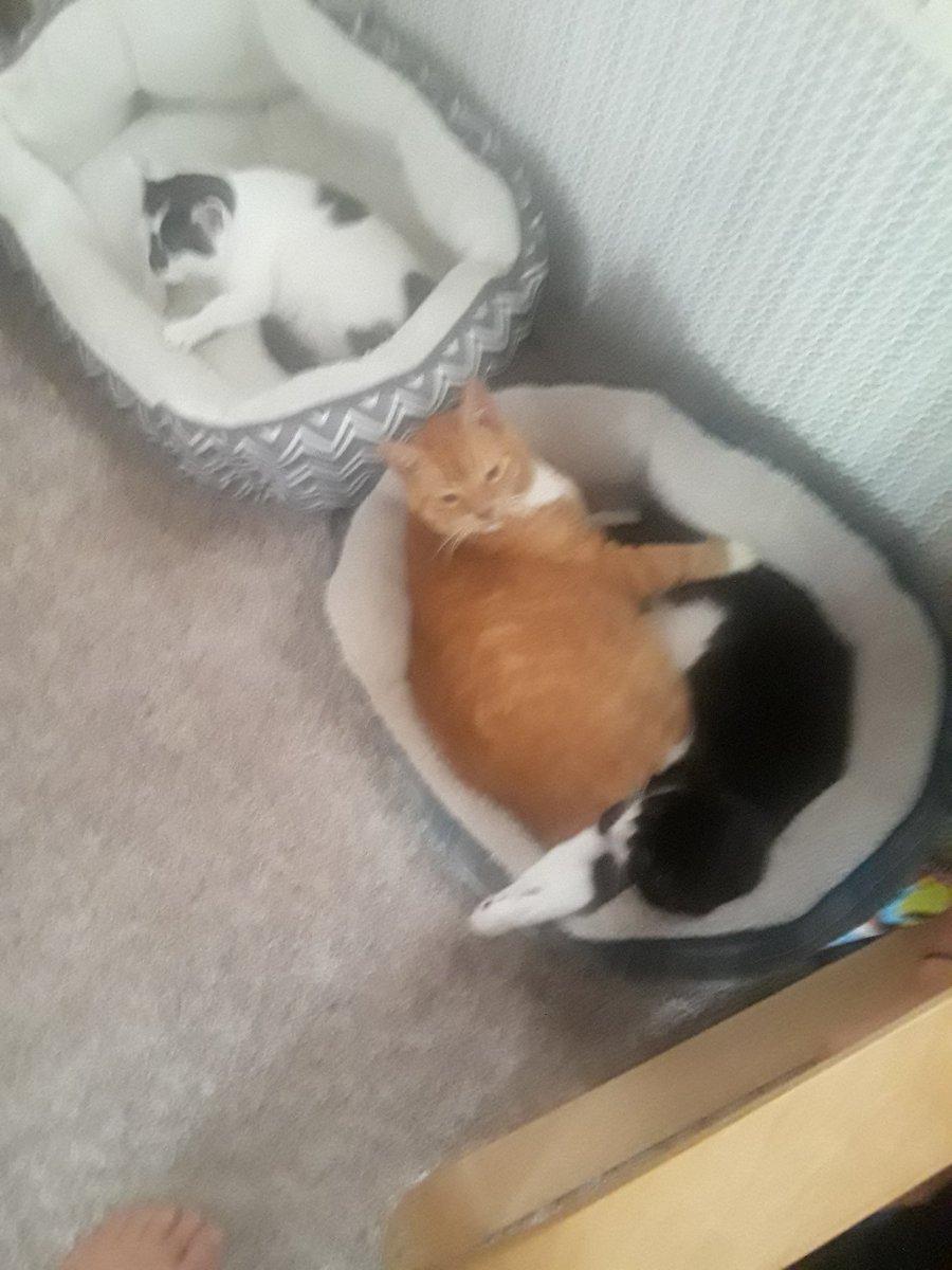 #IOwnARidiculousAmountOf cats
