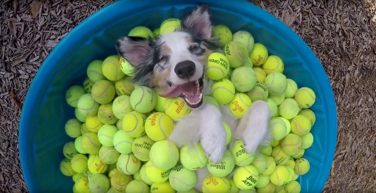 #IOwnARidiculousAmountOf Tennis balls!!! 🎾🎾🎾🎾🎾Good pal of mine said they're a great investment!   #woof #dogtweet #dogsoftwitter