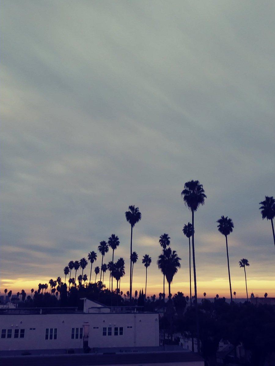 #california #love #talltalltrees