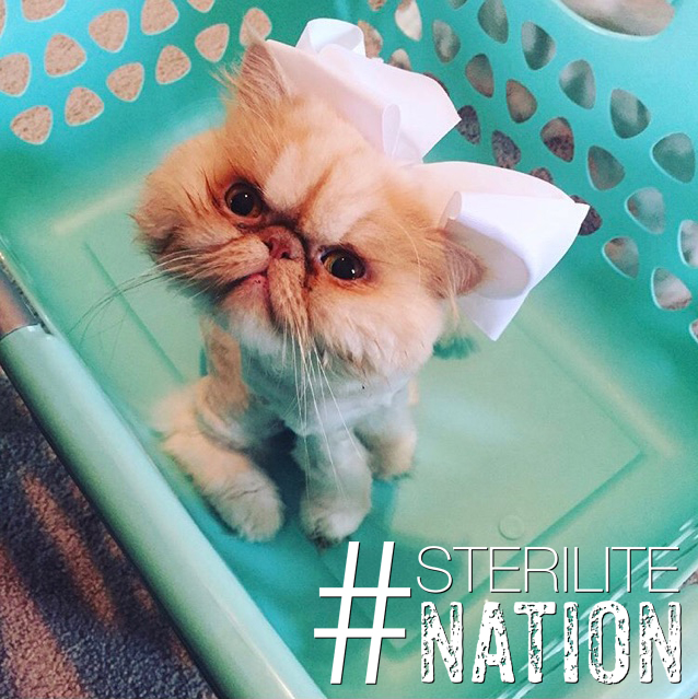 Put your laundry face on #grumpycat #sterilitenation . . .  #laundry  #laundryroom  #laundryday  #cleaning  #home  #drycleaning #catsofinstagram #momlife   #clothes  #homedecor  #photooftheday #detergent