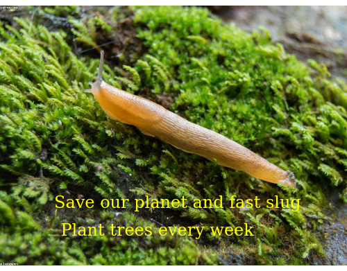 Keep humanity alive and brave slug from from home, please donate for more trees  & ReTweet, #DumpTrump, thank you