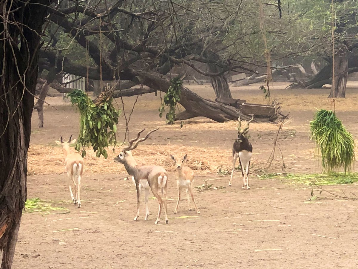 Ungulates are also served hanging fodders so that they can fulfil their need of browsing. Food enrichment plays an important role in animal care.