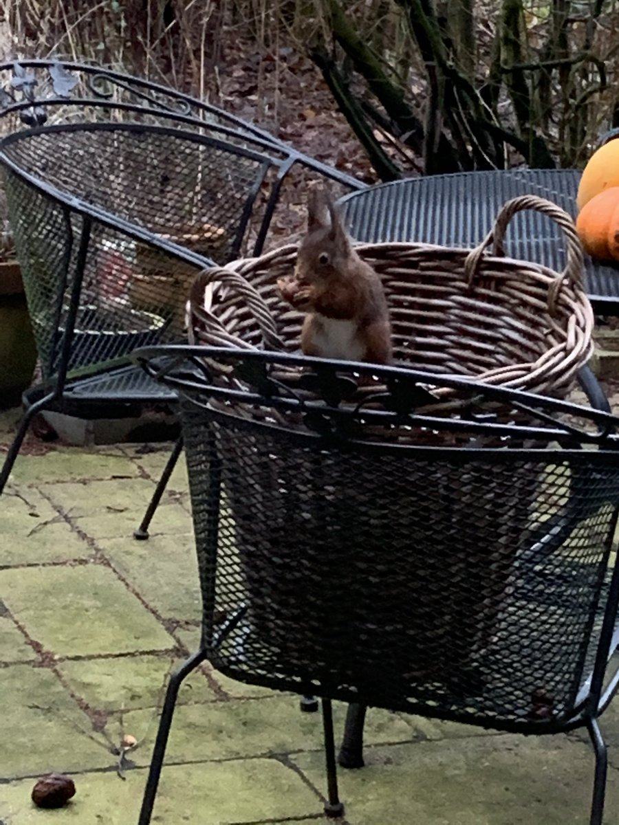 Breakfast together with our #garden #squirrel