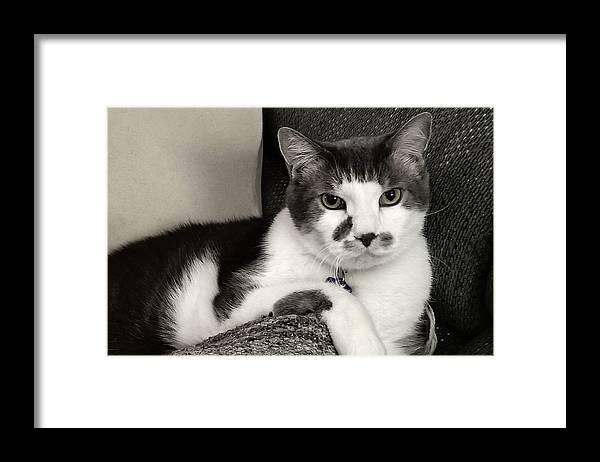 My #Cat is on #FineArtAmerica!  #photography #photo #portrait #cattitude #giftideas #feline #shorthair #blackandwhite #blackandwhitephotography #shopsmallbiz #photography #wallart #prints #wallartfor sale #smallbusiness #shopsmallbusiness #gift #shopsmall