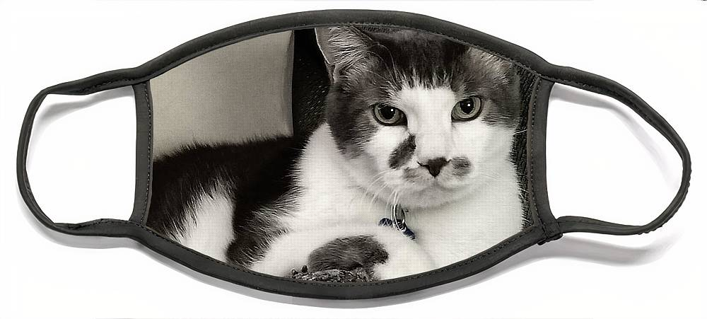 My #Cat #FaceMask on #FineArtAmerica!  #catphotography #animals #portrait #cattitude #giftidea #feline #shorthair #blackandwhite #blackandwhitephotography #shopsmallbiz #photography #COVID19 #pandemic #facemasksforsale #smallbusiness #cats #gift #shopsmall