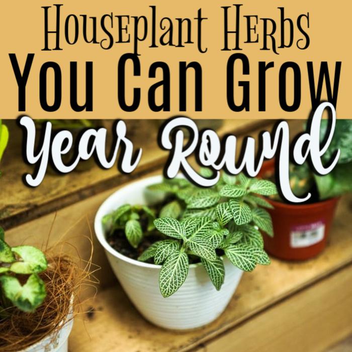 Houseplant Herbs To Grow Year Round   #urbangarden #wholefoods #gardening4pleasure #eatyourveggies #mygarden #vegetables #growsomethinggreen #gardening101 #epicgardening #urbangardening