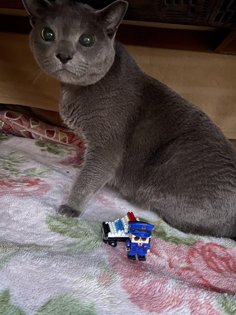 test ツイッターメディア - 👮「この近くでキッチン荒らしたグレーの猫見かけませんでしたか?」  そ「おひゆねちてたから、分かりましぇん( ˙꒳˙  )???」  ま「Σ( ˙꒳˙ ;)ばりぇた……💧」  #ダイソー #プチブロック  #プチブロック部 https://t.co/zfniAflcAM