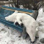 だれが作ったのか?!ベンチの上にリアルな豚の雪像w