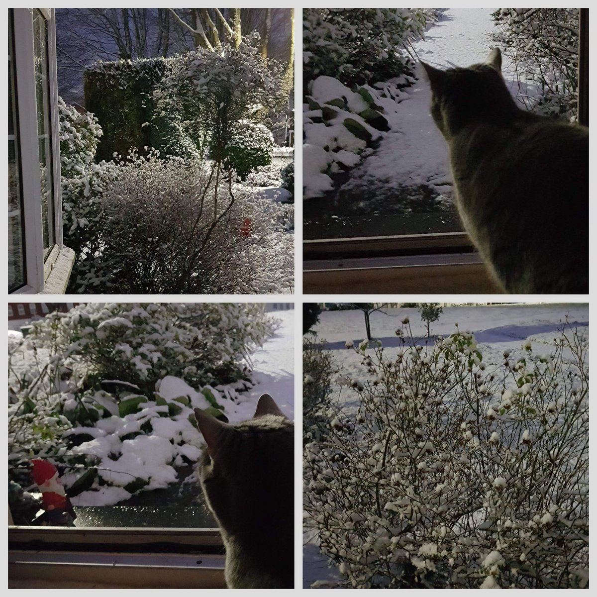 @BristolLive Bee pondering if time to play #Bristol #snow #cats