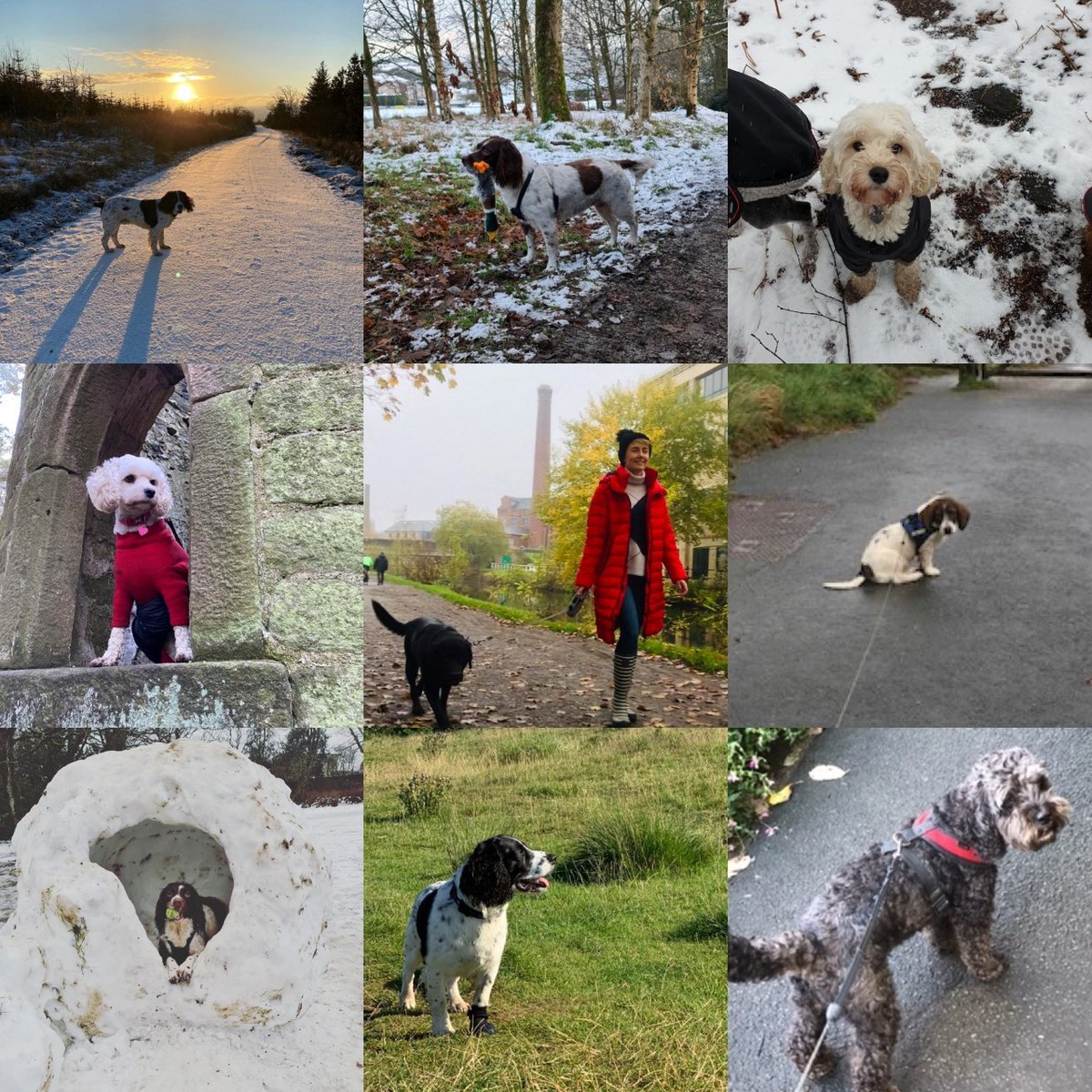 Did somebody say WALKIES? The Team Damart Doggies are loving getting out for a wintery walk this weekend. Send in your snaps of your pooches out for their #SundayStroll