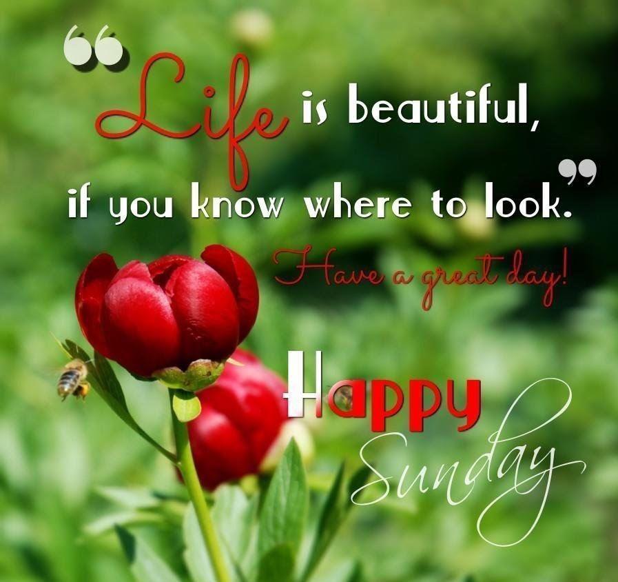 Good morning! It's Sunday funday... Rise and shine! Hope you have a wonderful day! 😊💕 #sundaymorning #sundaymotivation #SundayFunday #sundayvibes #sunday #motivation #quotes #quote #Inspiration #inspirationalquotes #inspirational