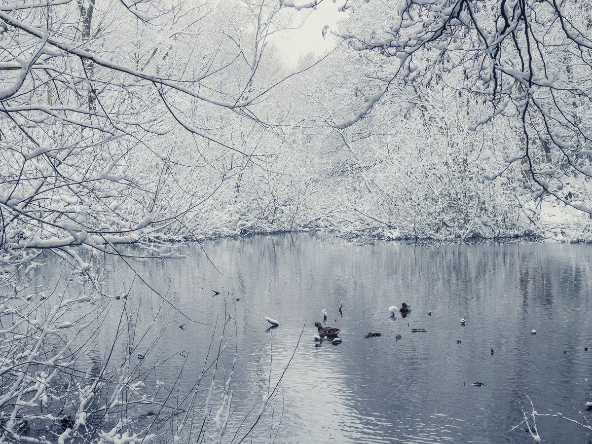 Ducks are resting peacefully   #snow #Snowing #Snowuk #shotoniphone12promax #adobelightroom #appleraw