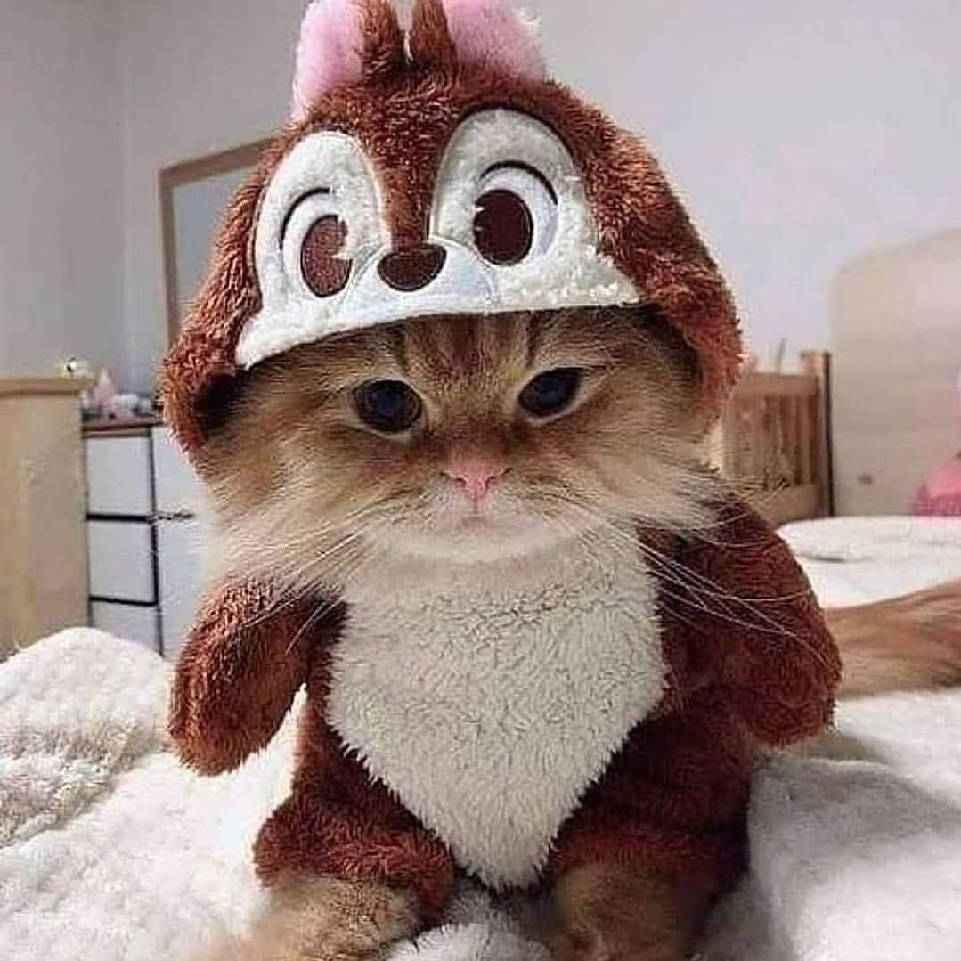 #love #cat #CatsOfTwitter #catsofinstagram