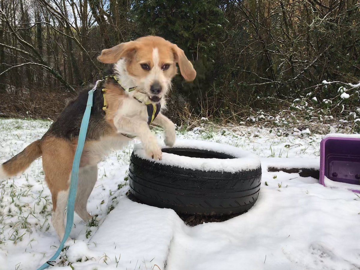 So then this happened... ⛄️ ❄️ We don't often get #snow @DogsTrust #Ilfracombe but when we do Sponsor Dog DEXTER has a good explore!     #adogisforlife #rescuedogs #snowday #AdoptDontShop 💛🐶💛