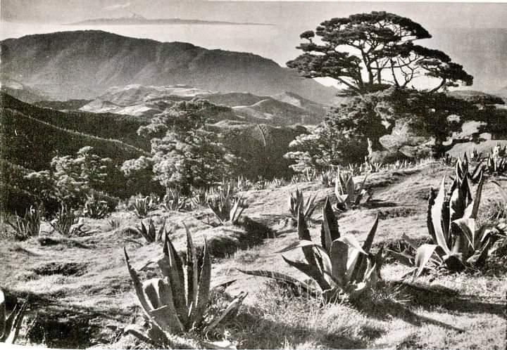 Un Antes! Vista del #Teide (al fondo) desde #Gáldar #GranCanaria #IslasCanarias Año1967 📷➡ Rojas (Costa Canaria) 📷#AntiguaTenerife