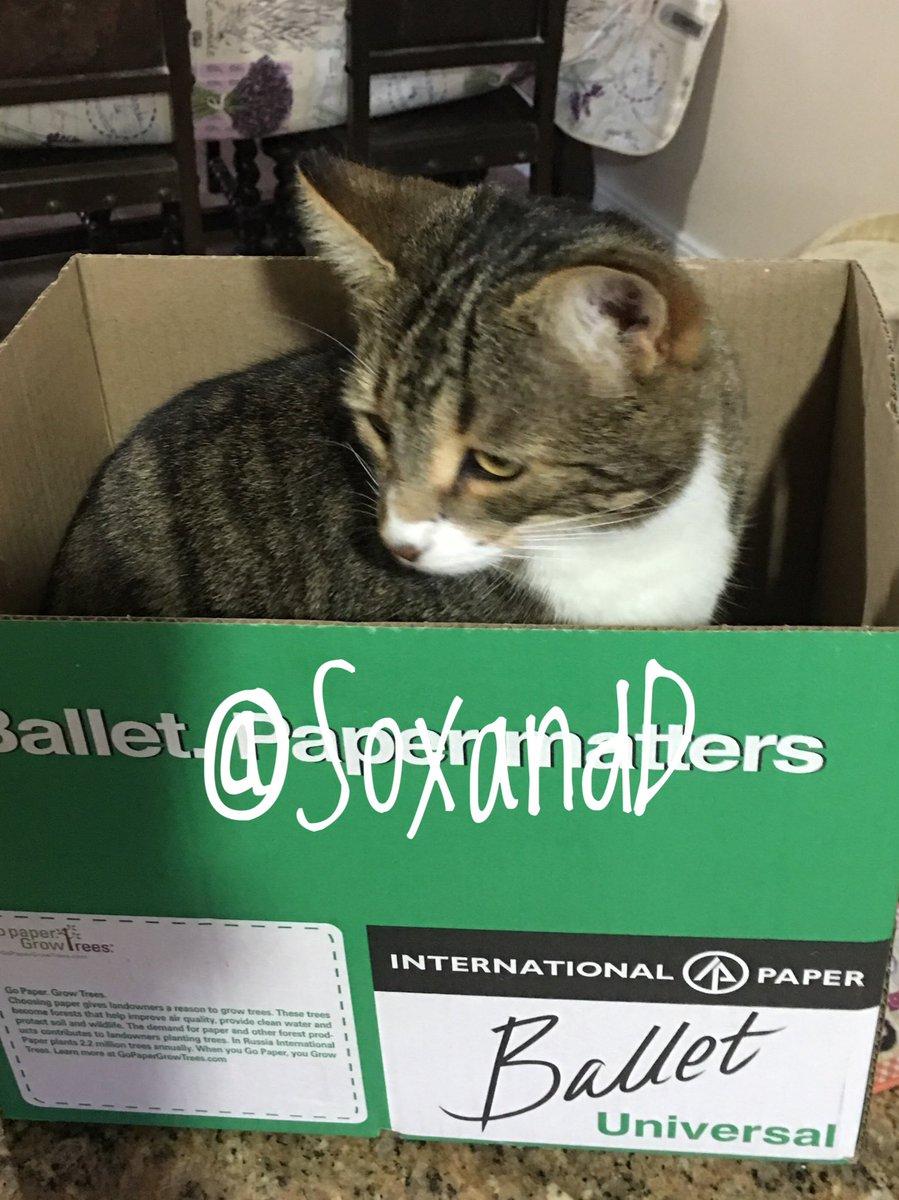 Here's a #Throwback of us a couple of years ago when we had some boxes 📦 📦........!! 😹👍 happy #catboxsunday evefurryone  🐾❤️🐾😻🐾❤️🐾😻🐾❤️🐾😻   #CatsOfTwitter #TabbyTroop #SundayFunday #sundayvibes #SundayThoughts #SundayMotivation #SundayMorning