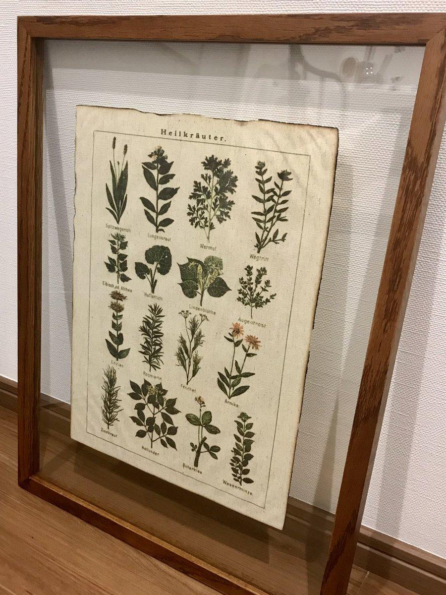 フィジカ店主が大きなガラスフレームを贈ってくれました。ドイツのハーブ標本を入れてみたらまるで美術標本のよう✨読めない知らないハーブばかりですが(笑) #植物の力 #植物療法 #ハーブ #アロマ #草木染め #屋上庭園 #ハーブガーデン #ハーブのある暮らし #レンカ #ハーブスタジオイリーダ #杉並区 https://t.co/ksOS6816il