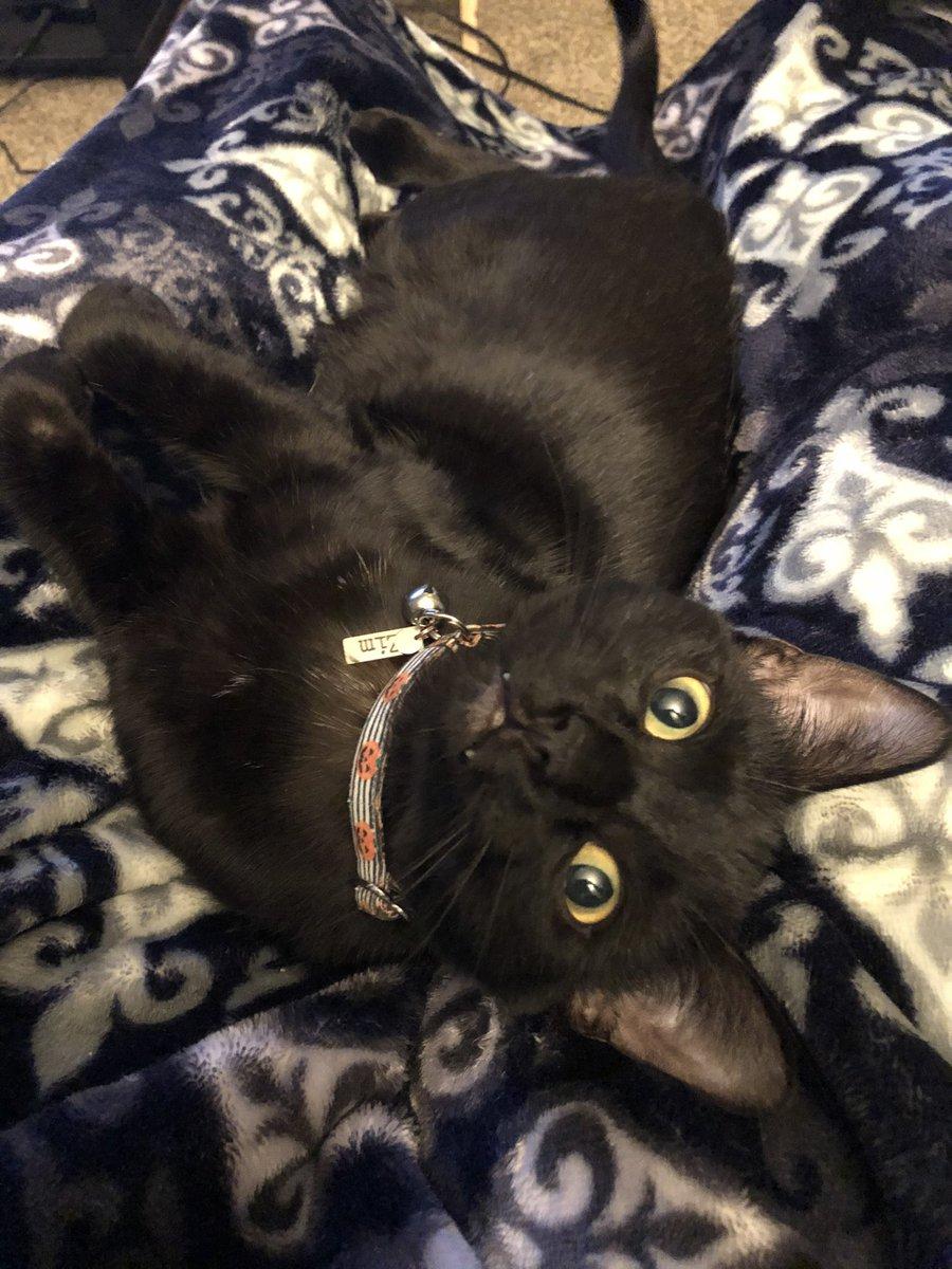 Im a bat 🦇 🦷 🖤 #sundayvibes #CatsOfTwitter #blackcats