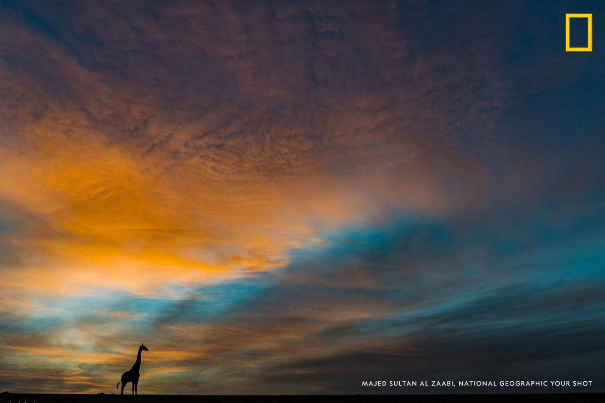 A giraffe is silhouetted against a gorgeous sunrise in Masai Mara National Reserve, Kenya in this photo by Your Shot photographer Majed Al Zaabi
