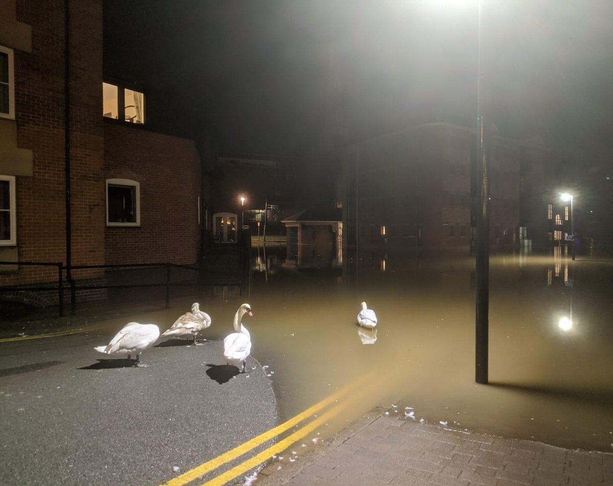 city: *gets flooded*  swans: our uprising hath begun