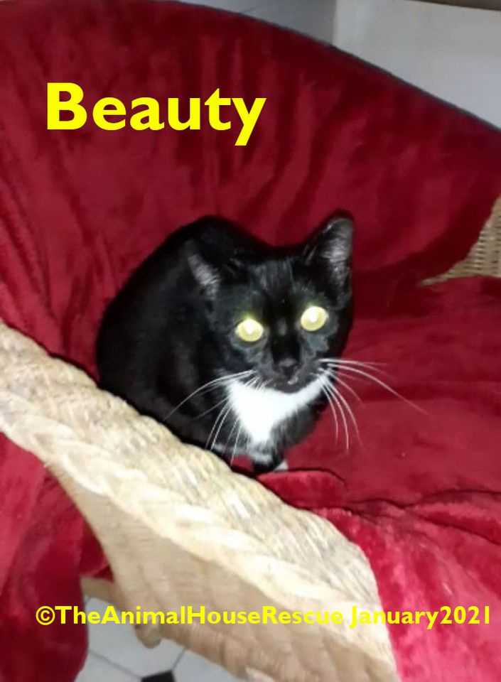I'm 3⃣ years old & my name's Beauty! I truly am beautiful but I do come with a few issues so I need a very special home. If anyone out there is prepared to give me a chance then PLEASE R/T or read more about me here  #cats #brumhour #adoptacat #sundayvibes