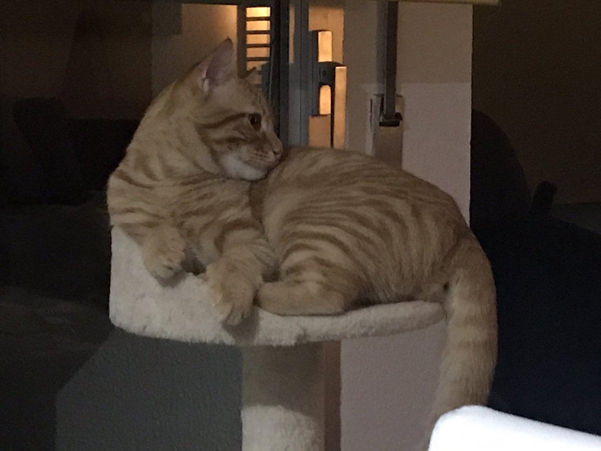 #CatsOnTwitter #gatos #sweet My love Neko 😻