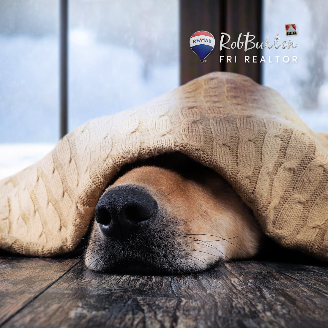 ❄️ Breathe in and know that good things are going to happen! —Tao Porchon-Lynch  #chillin #sundayvibes #sundaymood #sunday #sundayfunday #weekend #happy #dogs #smile #family #mood #goodvibes #relax #lifestyle #goodmorning #homesweethome #RobBurtonToday