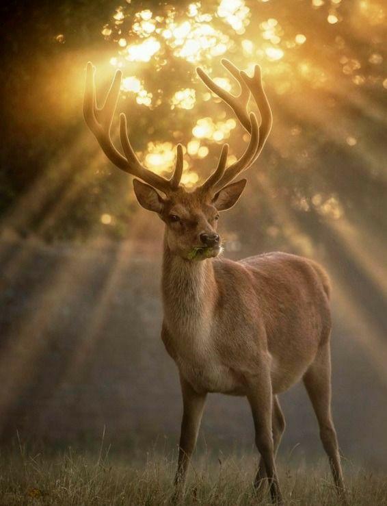 Great king of the forest #nature #naturelovers #wonderful #beautiful #naturephotography #natureperfection #photooftheday #photograpy #beautiful #world #naturelove #cute #sweet #Travel
