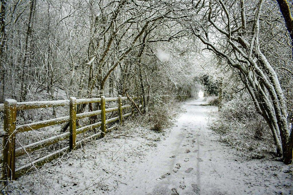#SundayMorning #snow Bridleway through the woods #graveley #Hertfordshire 24/1 #loveukweather #ThePhotoHour #earthcapture @WeatherHerts @hertslife  #NaturePhotography  #Weather #nature #landscapephotography #photooftheday