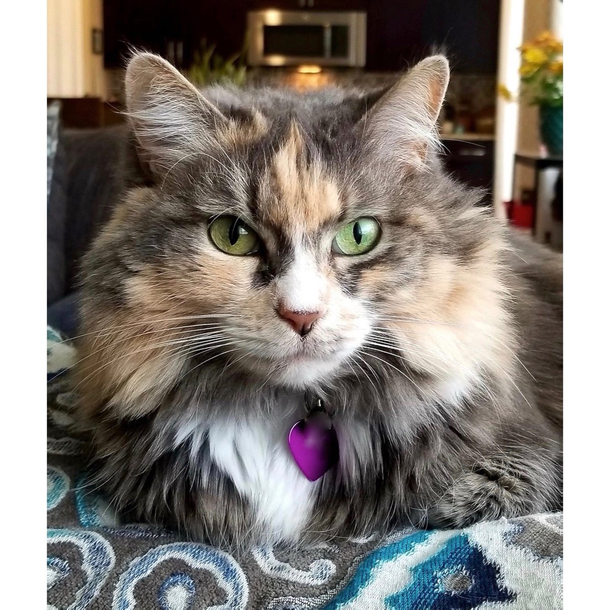 The weather report for this #seniorsunday calls for a breath of fresh air and sunny eyes, all thanks to 12 year-old Abbey! Many thanks to her human,  #teamcatmojo's Lori Anbuhl for the picture and for brightening our day!