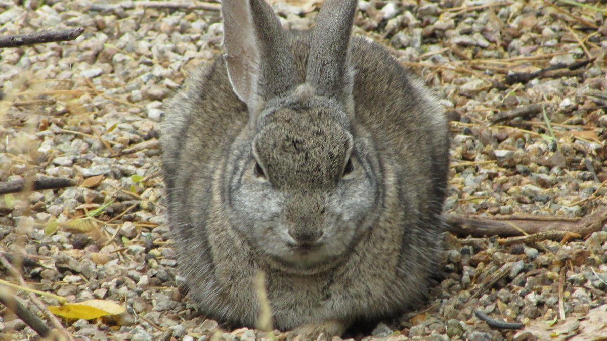 Get ready to smile as I share some animals that are rather grumpy in the early morning hours. #animals #humor #smile #blogsharesunday #sundayblogshare #SundayThoughts #bloggingcommunity #wildlife #NaturePhotography