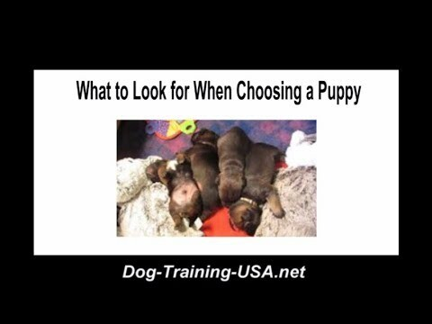 What to Look For When Choosing a Puppy  #dogs #dog #dogtraining #puppies