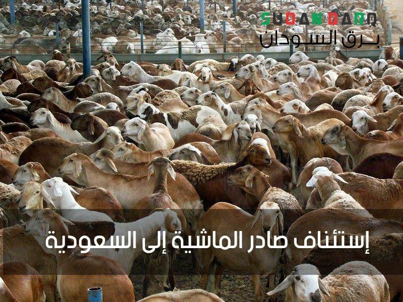 #السودان | إستئناف صادر الماشية إلى #السعودية  تغادر يوم الثلاثاء،  ميناء سواكن بولاية البحر الأحمر، باخرة مواشي حية تحمل 10 آلاف رأس من الضأن إلى ميناء جدة بالسعودية لصاحبها المصدّر بشير عشي، إيذاناً بإستئناف صادر الماشية إلى المملكة العربية السعودية بعد  #برق_السودان