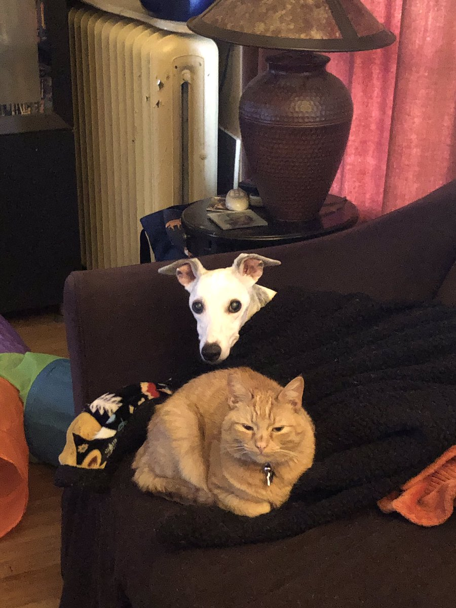 Cozy #SundayMorning with the #animals. #cat #cats #dog #dogs #pets #sleepy #sundayvibes #whippet #whippetgood #dogsofinstagram #CatsOfTwitter #cute #DogsofTwittter