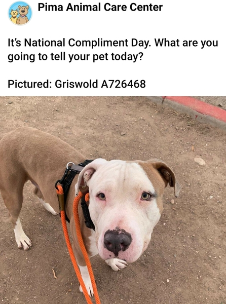 Adoptable #Dog #Griswold_PIMAAZ_01 I'm featured on the shelter's Facebook page! #suddenlyfamous