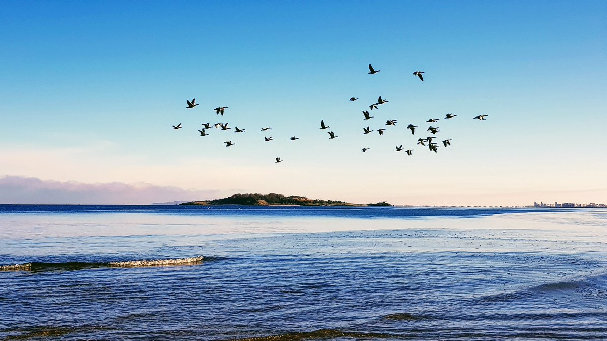Just caught these geese flying over Cramond Island #NaturePhotography #birds #geese #islands #flights #sky #PhotoOfTheDay #weekendvibes