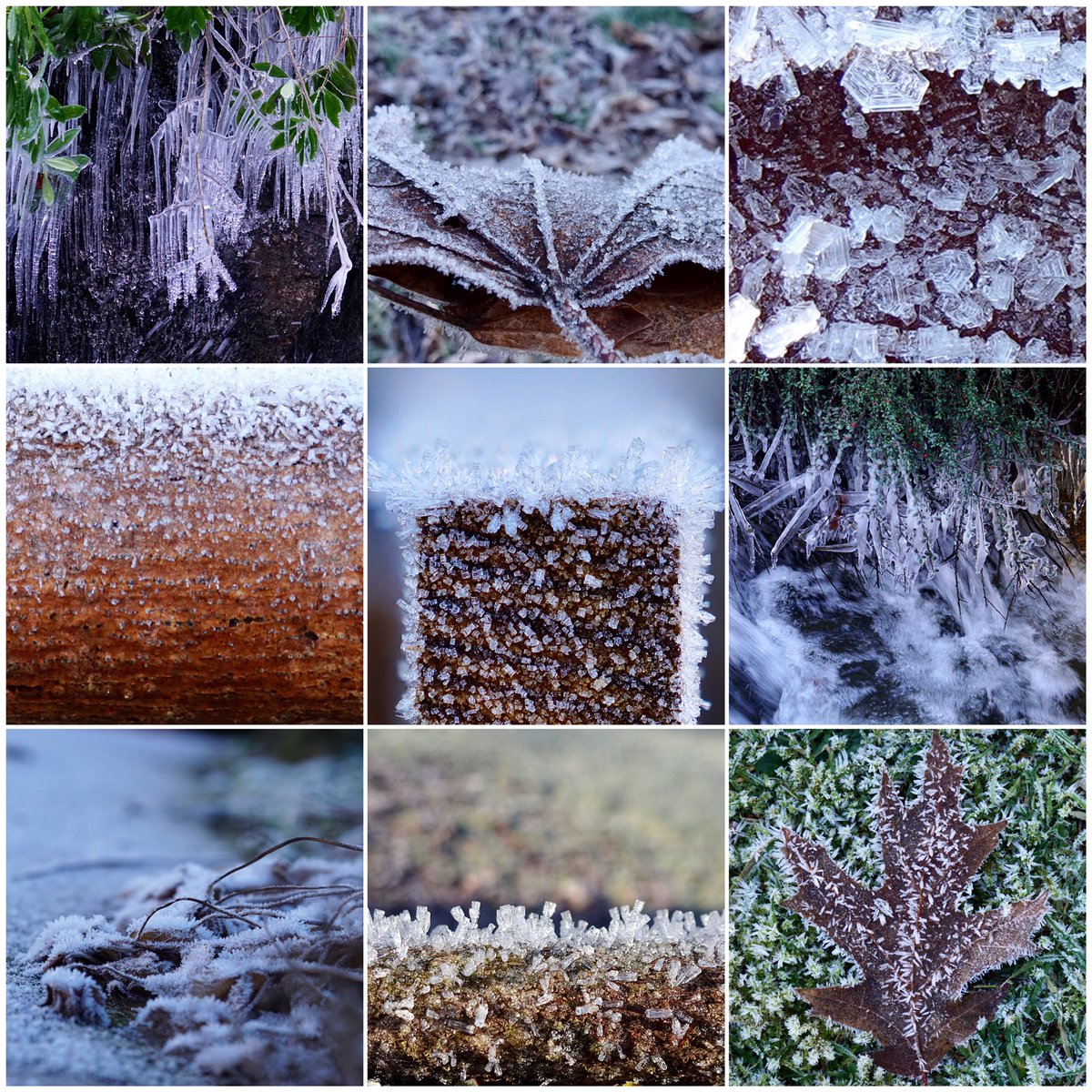 I really enjoyed my walk this #morning in the #sunshine #cold and #frost Just look how #beautiful #nature is. @Natures_Voice @plants #icicles #leaves #fence #posts @Britnatureguide It took me hours to thaw out but you know what, it was worth every second. #MentalHealthMatters 😊