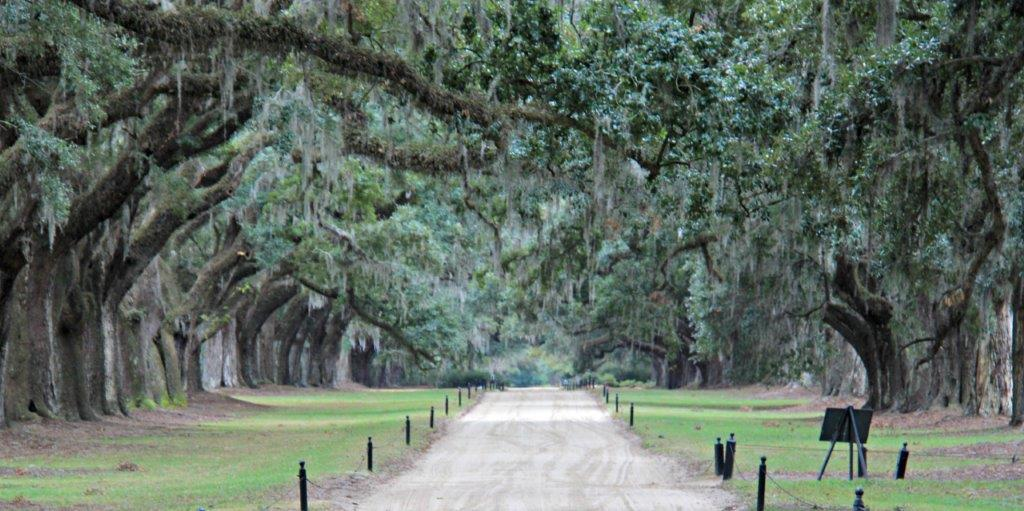 What are the Best Plantations to Visit Near Charleston?  #explorecharleston #charleston #travel #ttot