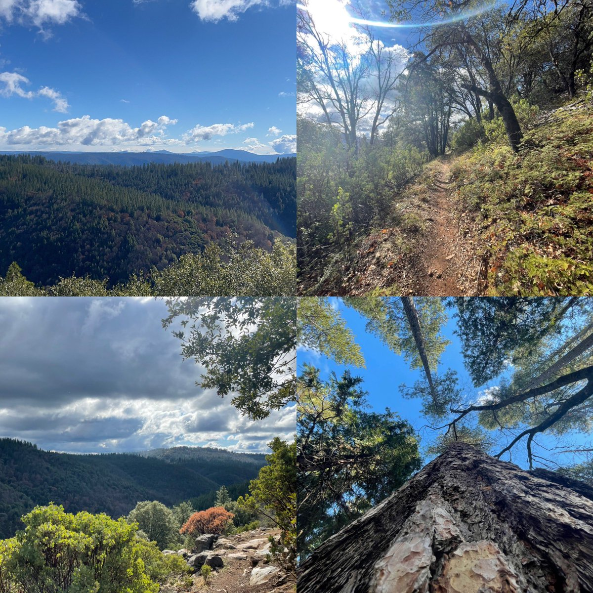 Yesterday hike of the Arnold Rim Trail. Great day to remove clutter from the mind. #naturephotography #hiking #hikingadventures #bluesky #breath #beautiful #California https://t.co/MZeUjGfOyG