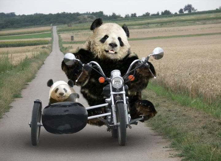 @AlexAndreasHous ¿Es hora de una nueva estrategia de marketing que pueda aumentar tus lectores al 100%? ¿Por qué no traduces tu libro al inglés? ¡Ponte en contacto con Panda para obtener más información!  #Traducir