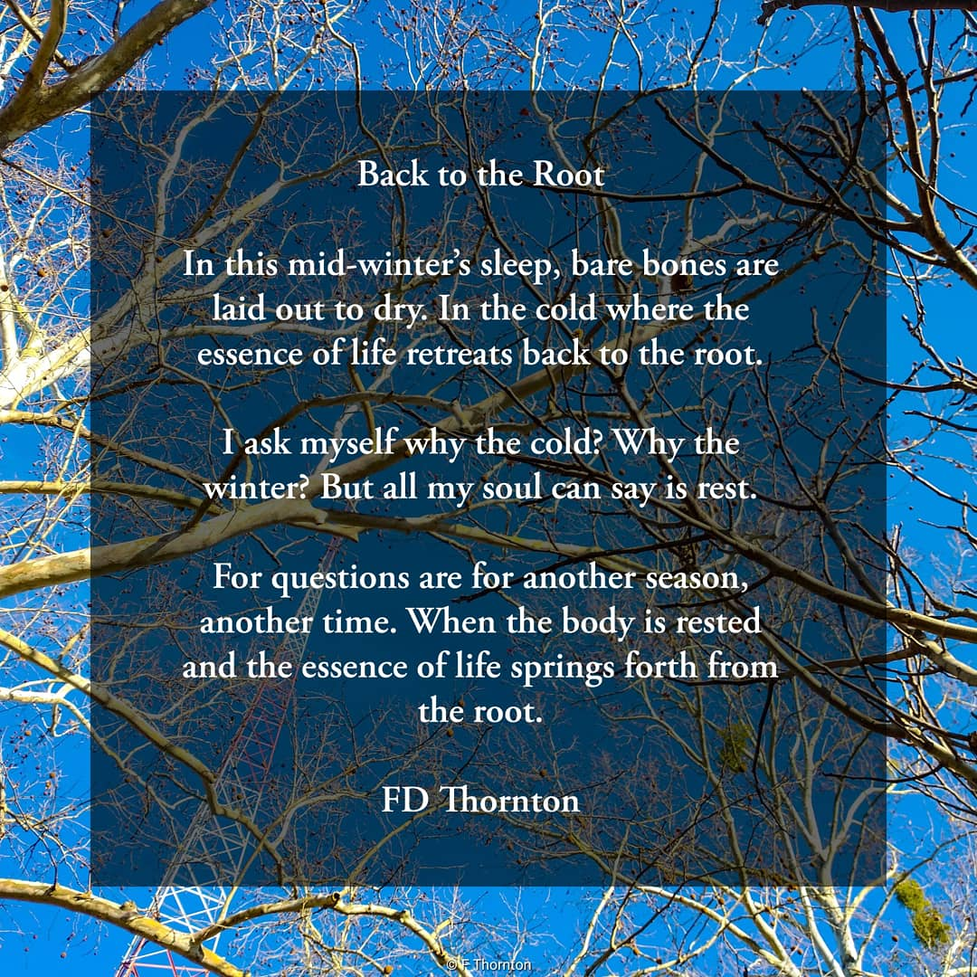 Back to the Root #wintertime #poetry #pause #rest #reflect #patience #Mindfulness