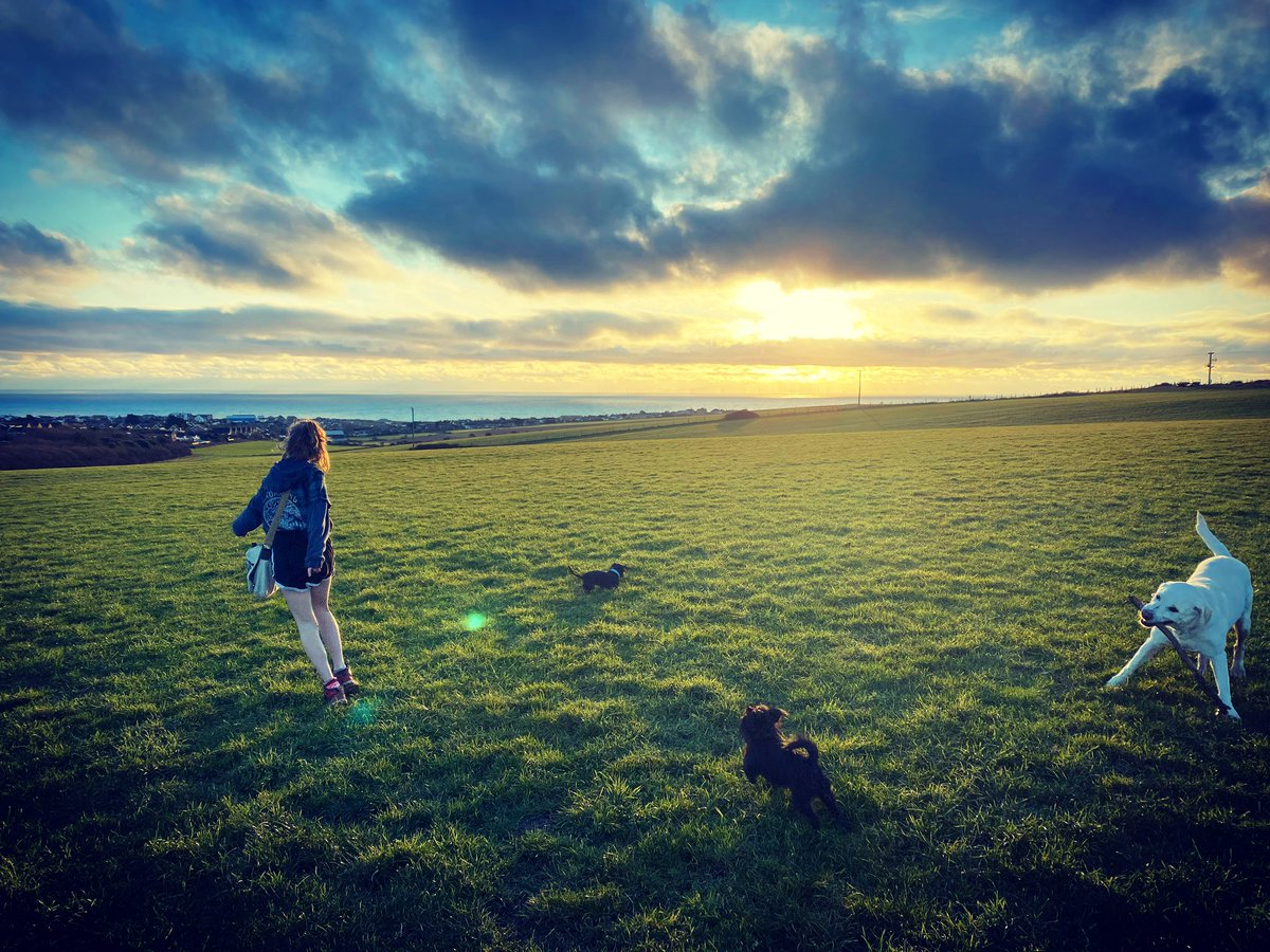 Dogs and deserted fields and Bliss running #sundayvibes
