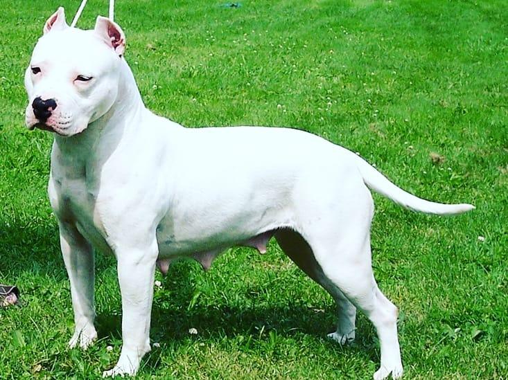 white female @pitbull.insta.fans  #americanpitbull #pitbulllovers #pitbullinstagram #pitbulllover #pitbullgram_ #pitbullgram #instapitbull #ilovepitbulls #pitbullofinstagram #lovemypitbull #pitbullsofinstagram #pitbull #pitbulllove #pitbullsdog #dogs #puppy #pup #cute #eyes
